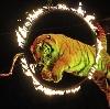 Цирки в Рыбном