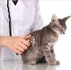 Ветеринарные клиники в Рыбном